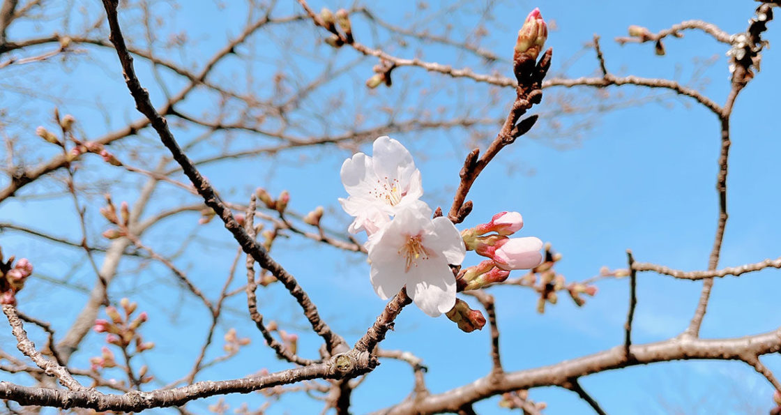 210315‗水間寺の桜