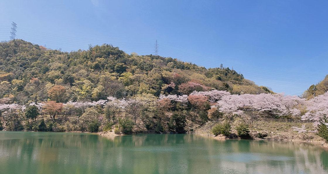 210331‗永楽ダムの桜