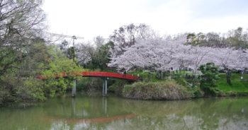 水間公園の桜