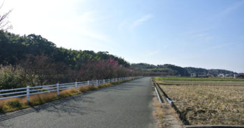 樫井川の梅‗2月10日